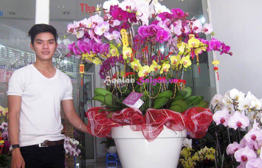 Chậu lan hồ điệp tại Hoa lan Sài gòn trong dịp tết 2015