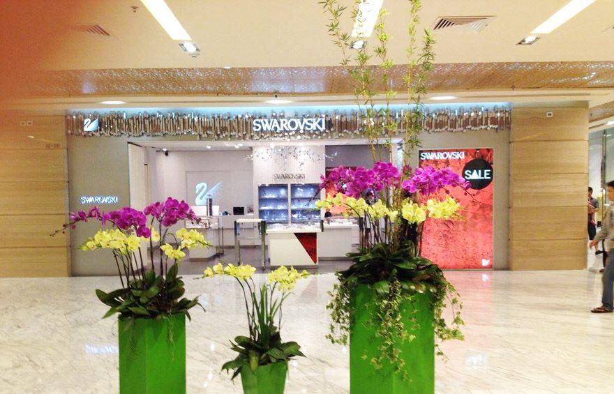 hoa-lan-tai-showroom-ly-nha-ky